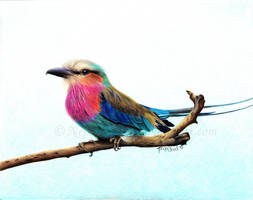 Lilac Roller by Nephthys76