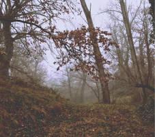 Forest II by lyyy971