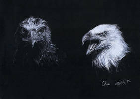 Eagles by Red-Cha