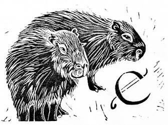C capybara by tinkerpaws