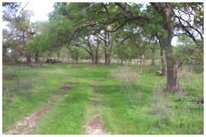Texas Chainsaw Massacre Field by CrazyMadSkill