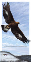 Golden Eagle: Over Winter Hill Prairie by pallanoph