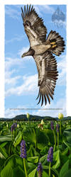Bald Eagle: Fourth Year by pallanoph