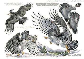 Custom Aequis: Mountain Harpy by pallanoph