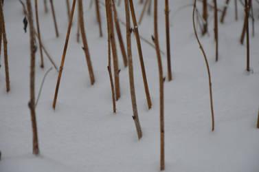 sticks in snow? by wiak