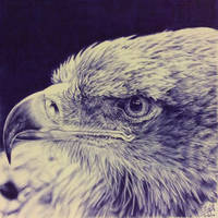 Ballpoint pen drawing of an eagle by chaseroflight