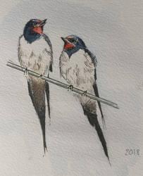 Swallows by archiwyzard