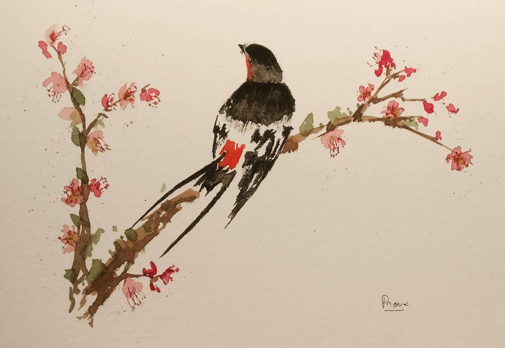 swallow by archiwyzard