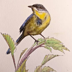 blue-yellow bird by archiwyzard