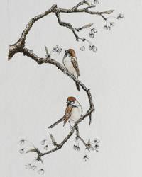 Sparrows by archiwyzard