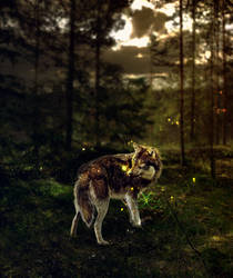 Firefly Forest by Kumiho-kami