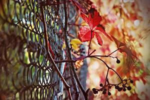 Autumn by keillly