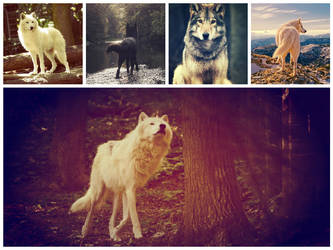 Wolf (Collage) by Epsilon-iota