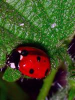 Ladybug by m-l-o-d-a