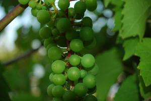 Simply green by m-l-o-d-a