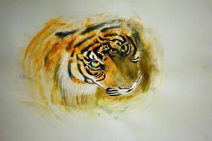 tiger. by Dontwannabemyself