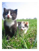 Cats by Taimii