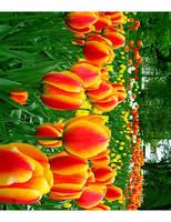 Tulips I by Taimii