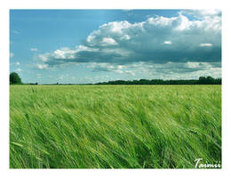 Field I by Taimii