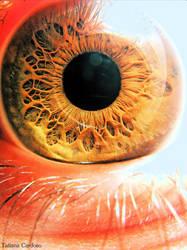 Iris by VisualFeelings