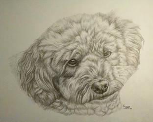 Rosie the Miniature Poodle by corvus16