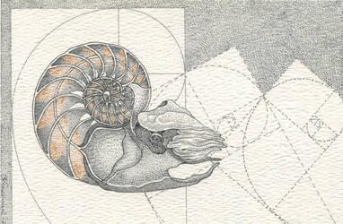 Pearly Nautilus by IngeVandormael