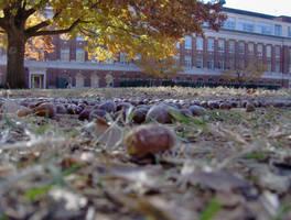 Fall 2006 by cyankali