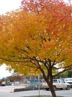 Farben im Herbst by cyankali