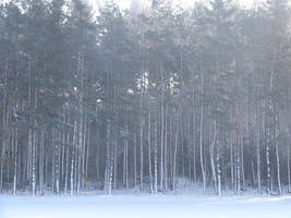 winter4 by cyankali