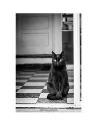 Black Cat by Mheely