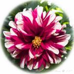 Wonderise Bloom by ExcaliburBlade