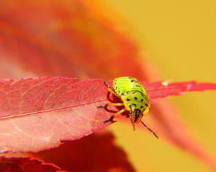 Green Ladybug by swashbuckler