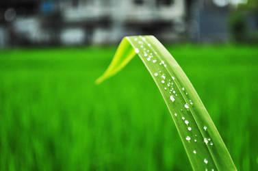 morning dew by cassieandrea