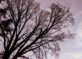 Tree by Rdzeniuch