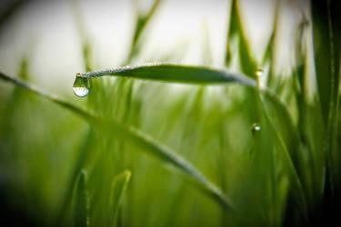 tears of life by rizyumnikov