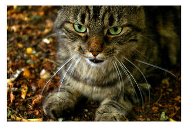 cat's eyes by Yoda2101