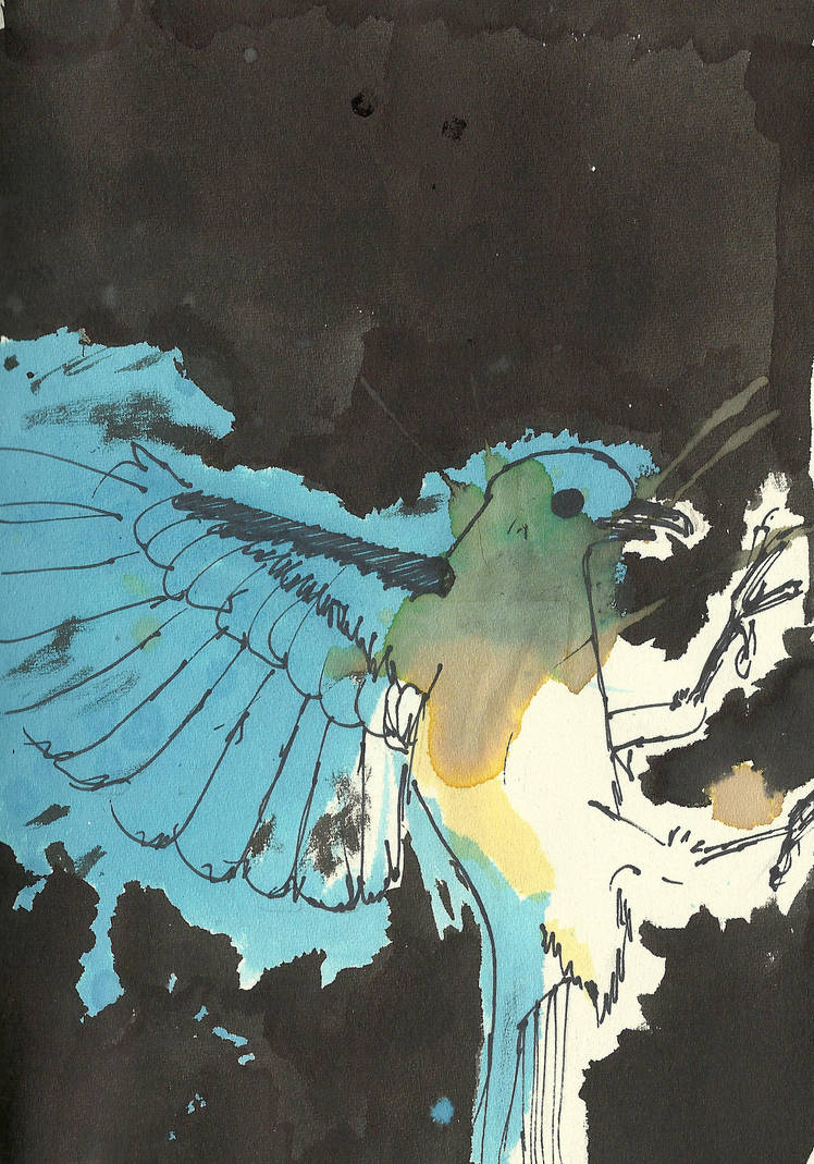 birdy by mitchey93