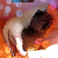 Little Kitties by MD-Arts