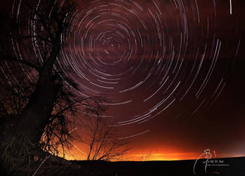 Star-Trails and Lime-Tree by MD-Arts