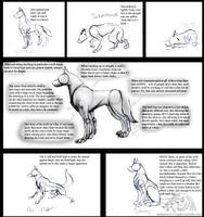 How To Draw Real Feral Wolves by CorruptTempest