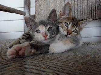 Sisterly Love by TheCrazyCatWhisperer