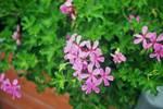 Flowers by joho972