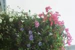 Flowers 2 by joho972