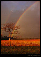 not just another rainbow... by Ana7hema