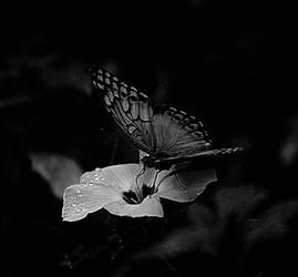 borboleta by sotoxic