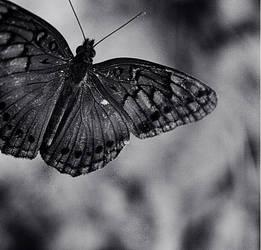 borboletaII by sotoxic