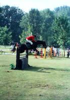 horse 03 by dandellionstock
