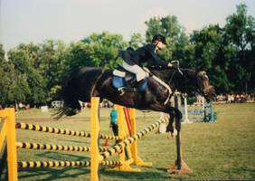 horse 04 by dandellionstock