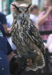 Eurasian Eagle Owl Stock 1 by LRG-Photography