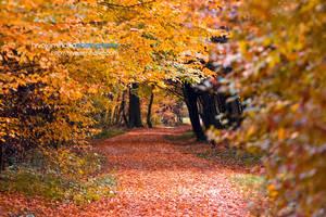 Autumn in Maksimir Park 09VIII by hrvojemihajlic